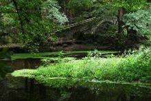 Pont moli d'en Bertrana. Ramon Mas